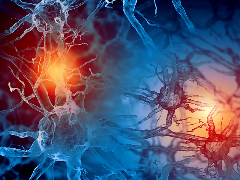 Picture of nerve cells